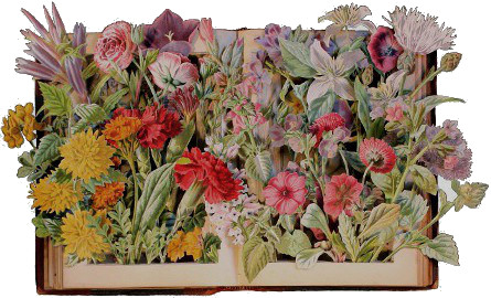 carved 3D book by Kerry Miller: Familiar Garden Flowers