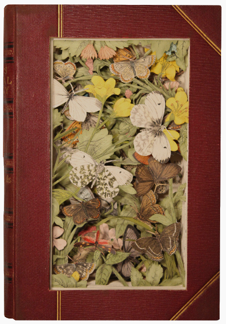 carved 3D book by Kerry Miller: A Hand-Book to the Order Lepidoptera, vol 5
