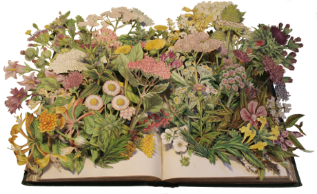carved 3D book by Kerry Miller: Flowering Plants of Great Britain