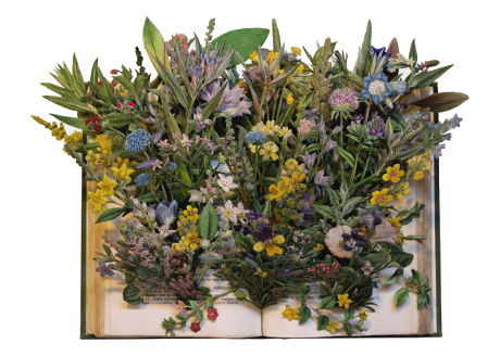 book sculptures by Kerry Miller: English Botany - vol 2